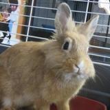 Menthe, Animal lapin à adopter
