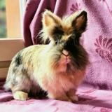 Etincelle, Animal lapin à adopter