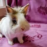 Youpi, Animal lapin à adopter