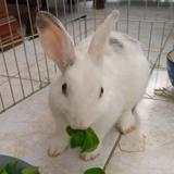 Billy, Animal lapin à adopter