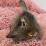 Citron, Animal lapin à adopter