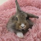 Cacao, Animal lapin à adopter