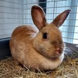 Libby, Animal lapin à adopter