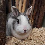 Spot, Animal lapin à adopter