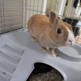 Tefal, Animal lapin à adopter