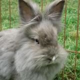 Mangue, Animal lapin à adopter