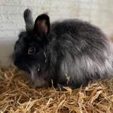 Persil, Animal lapin à adopter