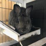 Rana, Animal lapin à adopter