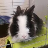 Doudou, Animal lapin à adopter