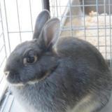 Brioche, Animal lapin à adopter