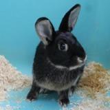 Mistinguette, Animal lapin à adopter