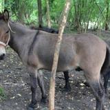 Nino, Animal mulet à adopter