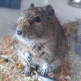 Gilou, Animal nac à adopter