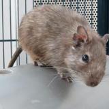 Raimond, Animal nac à adopter