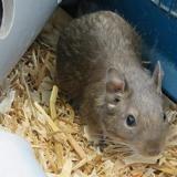 Carlos, Animal nac à adopter