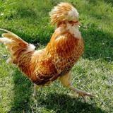 Picoretto, Animal oiseau à adopter