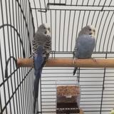 Kiko qnac, Animal oiseau à adopter