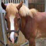Barbie, Animal poney à adopter