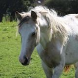 Itineris, Animal poney à adopter