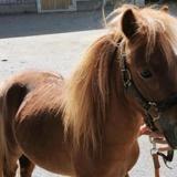 Romeo 20, Animal poney à adopter