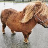Littlebig, Animal poney à adopter