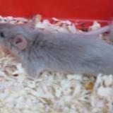 Nutella, Animal souris à adopter