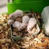 Mary, Animal souris à adopter