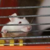 Nana, Animal souris à adopter