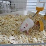 Jack, Animal souris à adopter