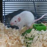 Mortimer, Animal souris à adopter