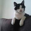 Flippy, Chat européen à adopter