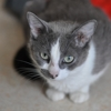 Hanae mori, Chat  à adopter