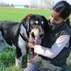 Buster, Chien mâtin espagnol à adopter