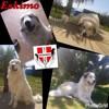 Eskimo, Chien chien de montagne des pyrénées à adopter