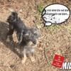 Milou, Chien  à adopter
