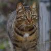 Meyko, Chat gouttière à adopter