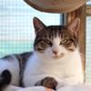 Aubepine, Chat européen à adopter