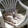 Moloki, Chat  à adopter