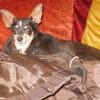 Emma - chienne, Chien européen à adopter