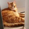 Beniko, Chat  à adopter