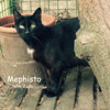 Mephisto, Chat  à adopter