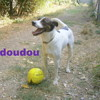 Doudou n°13694, Chien  à adopter