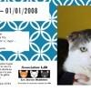 Zanko, Chat à adopter