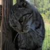 Flapjack, Chat gouttière à adopter