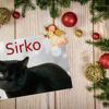 Sirko malvoyant cherche une famille d'accueil, Chat européen à adopter