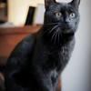 Willy, un chat parfait, Chat européen à adopter