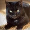 Natsu, Chat gouttière à adopter