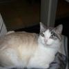 Maiwenn, Chat  à adopter