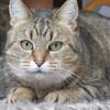 Mina, Chat  à adopter