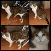 Ninou, urgence avant euthanasie (7 jours), Chat  à adopter